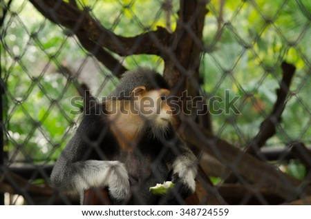 The alone macaque is in the cage.