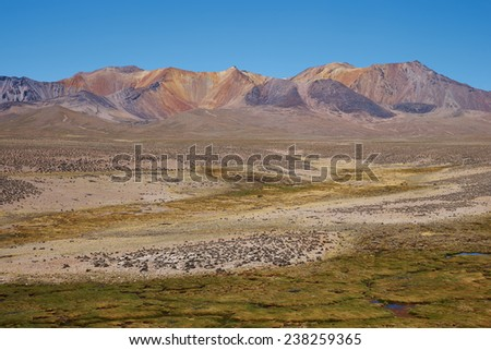 The altiplano, around 4000 metres above sea level, in Lauca National Park, Chile. The foreground is a wetland area of course grass known as a bofedal, beyond the colouful slopes of an extinct volcano.