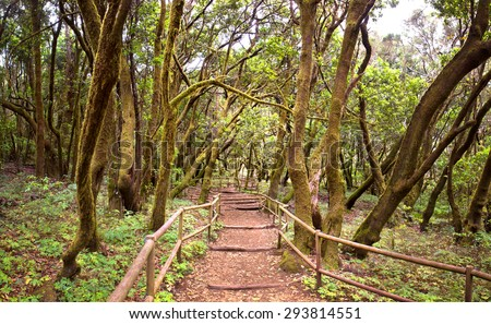 The amazing rain-forest in La Gomera, Parque Nacional de Garajonay, Canary islands, Spain - stock photo