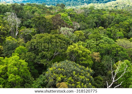The Amazon forest in Brazil - stock photo