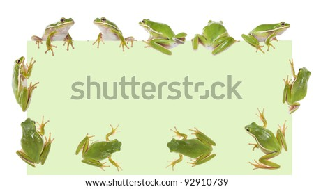 The American wood green frogs (Hyla cinerea) on a green sheet of paper - stock photo
