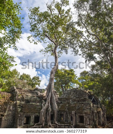 The ancient ruins and tree roots, Angkor Wat in Cambodia - stock photo