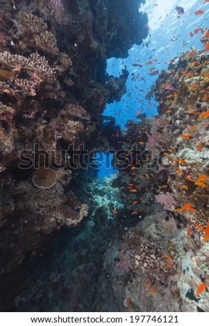 The aquatic life in the Red Sea - stock photo