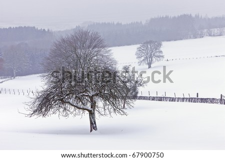 The Ardennes in winter - stock photo