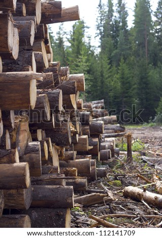 The are some felled trees on a grassland near coniferous forest under clear sky - stock photo