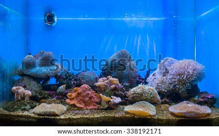 The art of aquarium. A tank filled with brine water for keeping live underwater animals