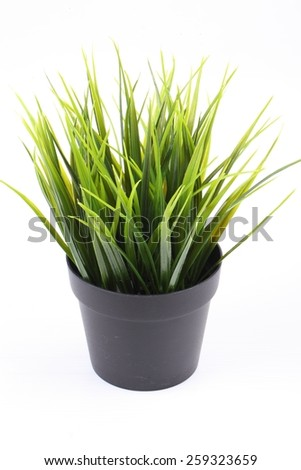 The artificial grass in the pot on white background