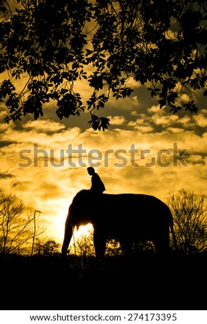 The asian elephant and mahout in forest silhouette - stock photo