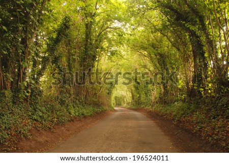 The asphalt road leading natural tunnel, Sussex United Kingdom - stock photo