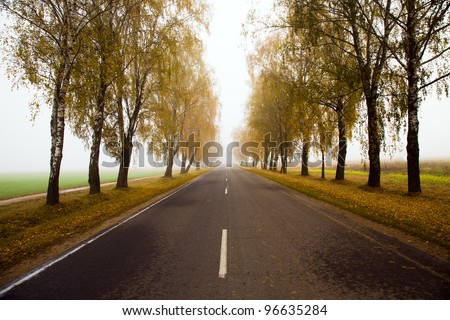 The asphalted road to an autumn season. A fog, low visibility, small depth of sharpness - stock photo