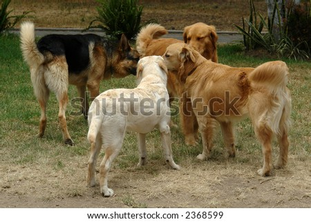 the assembly of the dogs - stock photo