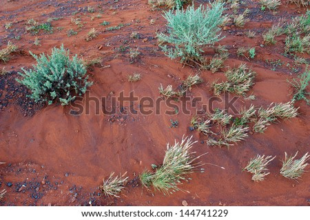 The Australian bush in the western australia - stock photo