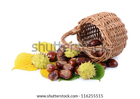 The autumn chestnuts isolated on white background - stock photo