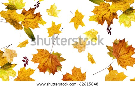The autumn fallen down leaves it is isolated on the white - stock photo