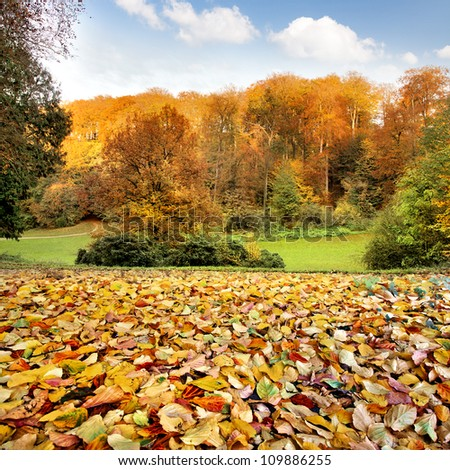 The autumn forest. Dry leaves in the foreground. Autumn landscape. - stock photo