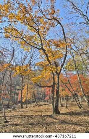 The autumn landscape in forest.