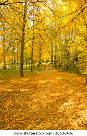 the autumn landscape with yellow, red and green trees