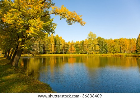 the autumn landscape with yellow tree and small pond - stock photo