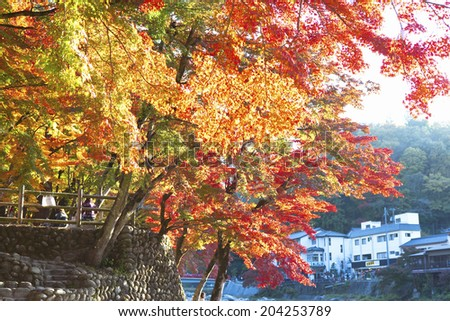 The Autumn Leaves Of Koarashi Valley
