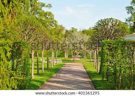 The avenue in Tsarskoye Selo park in the sunny spring afternoon