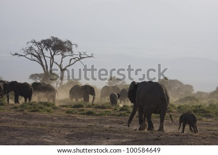 The baby with mother elephant. - stock photo