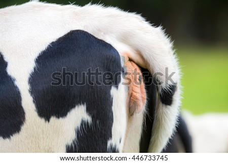 Backside Cow Stock Images Royalty Free Images Amp Vectors