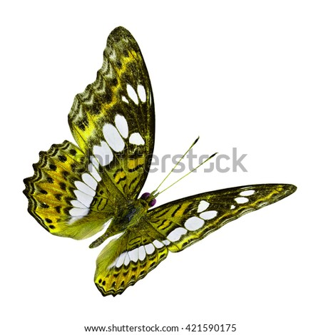 The back view flying fancy yellow butterfly, beautiful nature