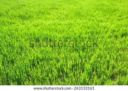 the background from a green grass in the field - stock photo