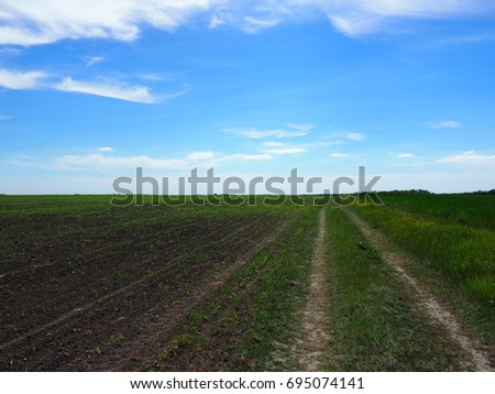 The background from the grass on the field reaching the horizon, the road, the forest belt,  the sky and the clouds.