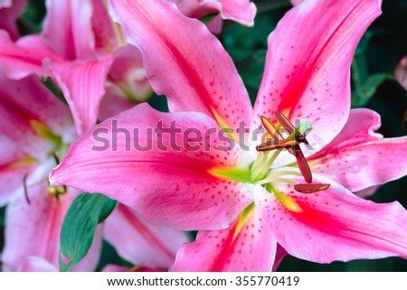 The background image of the colorful flowers, background nature - stock photo