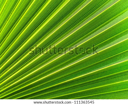 The background of palm leaf. Photo Close-up - stock photo