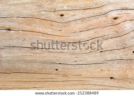 The background of tree bark. - stock photo