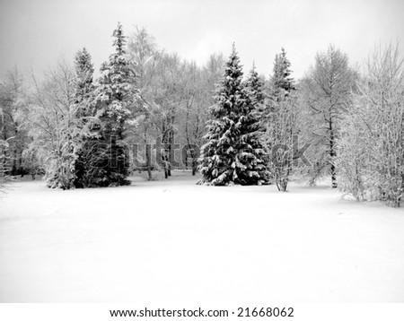 the background with winter trees at park - stock photo
