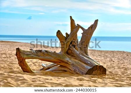 The Baltic Sea beach stump - stock photo