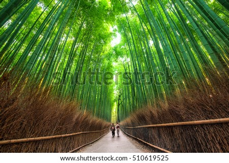 The bamboo groves of Arashiyama, Kyoto, Japan.
