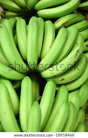 "The banana fruit grow in hanging clusters, with up to 20 fruit to a tier (called a hand), and 3-20 tiers to a bunch. The total of the hanging clusters is known commercially as a ""banana stem"". - stock photo"