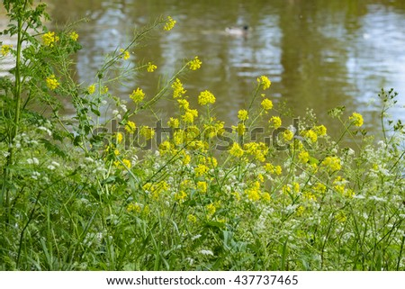 the banks of a river / stream / canal with lush vegetation on the banks. - stock photo