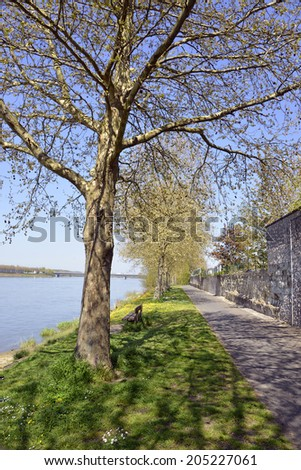 The banks of the Loire river at Saumur with trees, commune in the Maine-et-Loire department , Pays de la Loire region in western France.