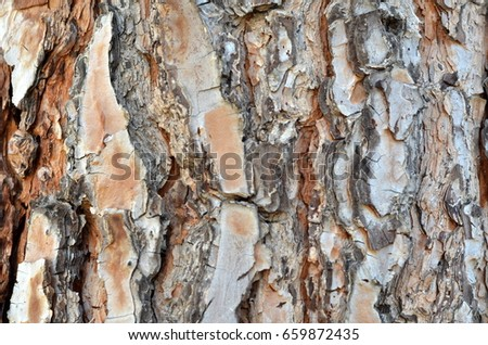 The bark of a large tree. Luxurious clothes of a plant. Specificity of drawing