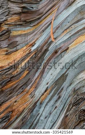 The bark of an eucalyptus tree, Ethiopia - stock photo