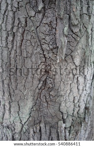 The bark of an oak tree. Highly detailed tree bark texture