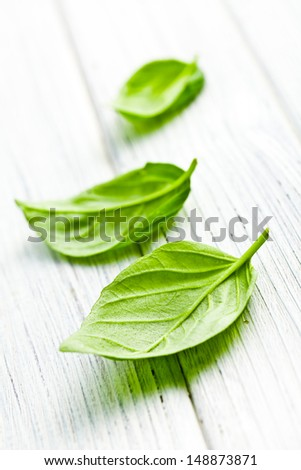 the basil leaves on kitchen table - stock photo