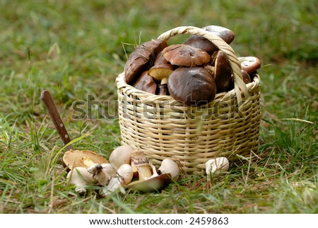 the basket with a mushrooms - stock photo