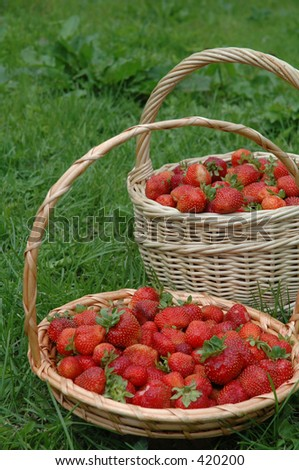 The baskets with berry in garden.