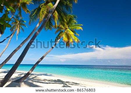 The beach, lagoon and coconut palms.
