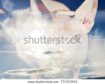 The beautiful abstract mixed image of the portrait of the cat of the Canadian Sphinx breed with the view to the clouds over the City Park at the spring sunny day.