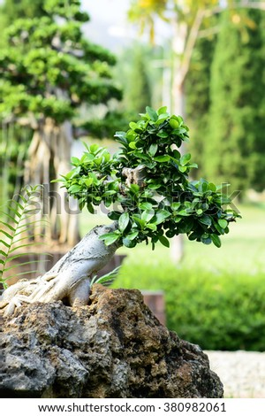 The beautiful bonsai tree on stone