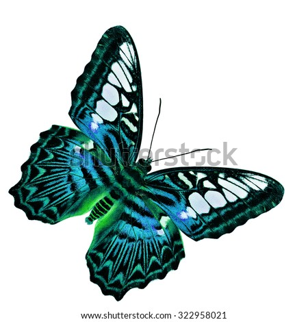 The beautiful bright blue butterfly isolated on white background