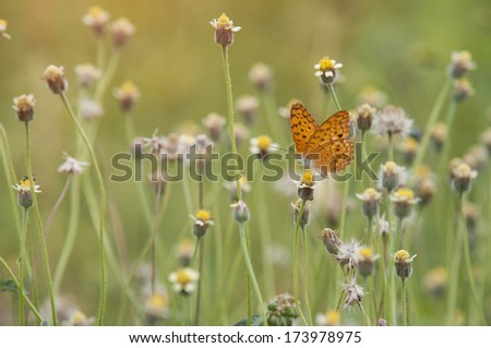 the beautiful butterfly sits on flowers - stock photo