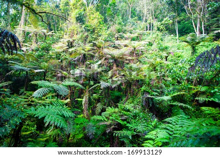 The beautiful Bwindi Impenetrable Forest in southwestern Uganda. The Bwindi Impenetrable Forest National Park is a UNESCO-designated World Heritage Site, home of the endangered mountain gorillas. - stock photo